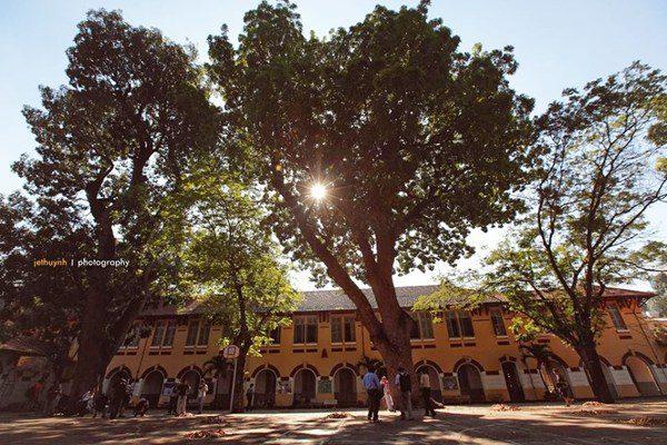 Hàng cây cổ thụ tỏa bóng xuống sân trường ngập nắng tạo nên một khung cảnh đẹp như tranh. Nguồn: Internet